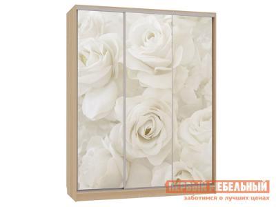Шкаф-купе  Бассо 7-600 розы Дуб Сонома МебельСон. Цвет: светлое дерево